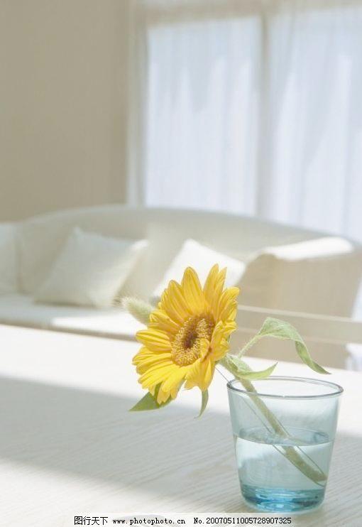 摄影图 室内设计 家居鲜花图片素材下载 家居鲜花 花卉 家庭设计 杯子