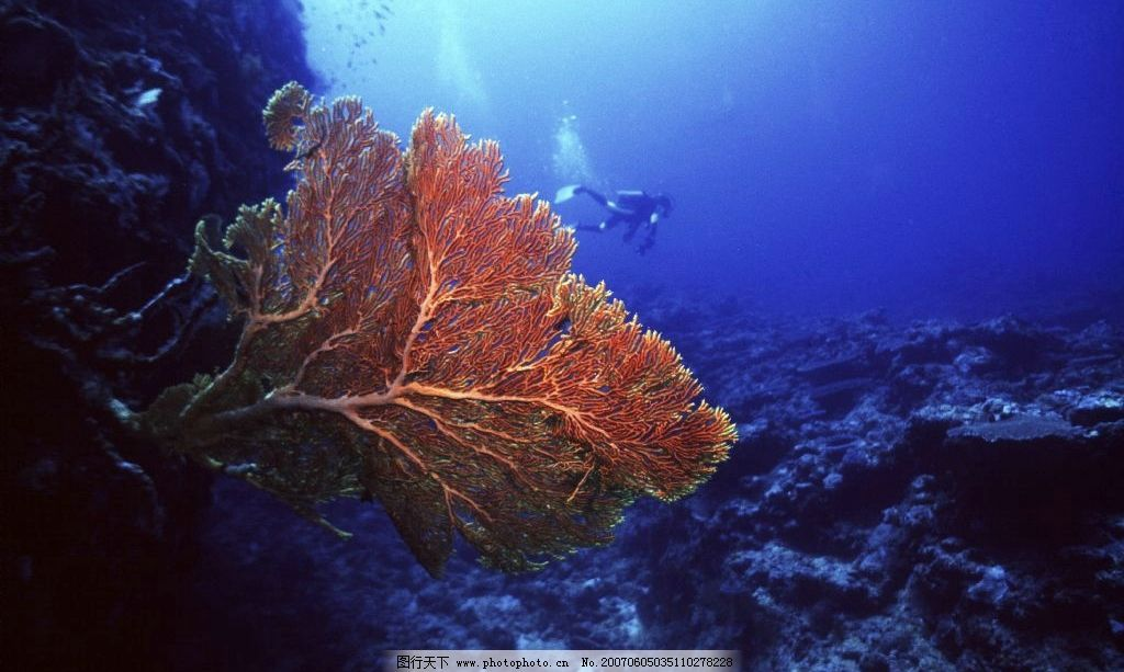 生物世界 海洋生物  海底植物 海底世界 水下摄影 海底美景 海底风景