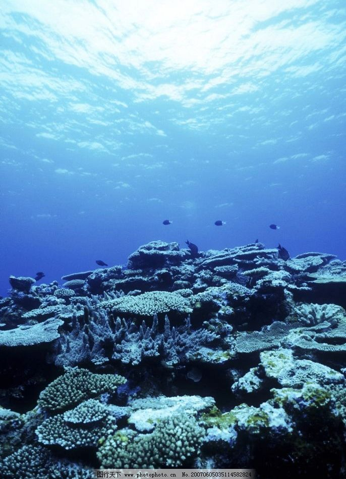 深海珊瑚礁 海底世界 水下摄影 海底美景 海底风景 深蓝色海水