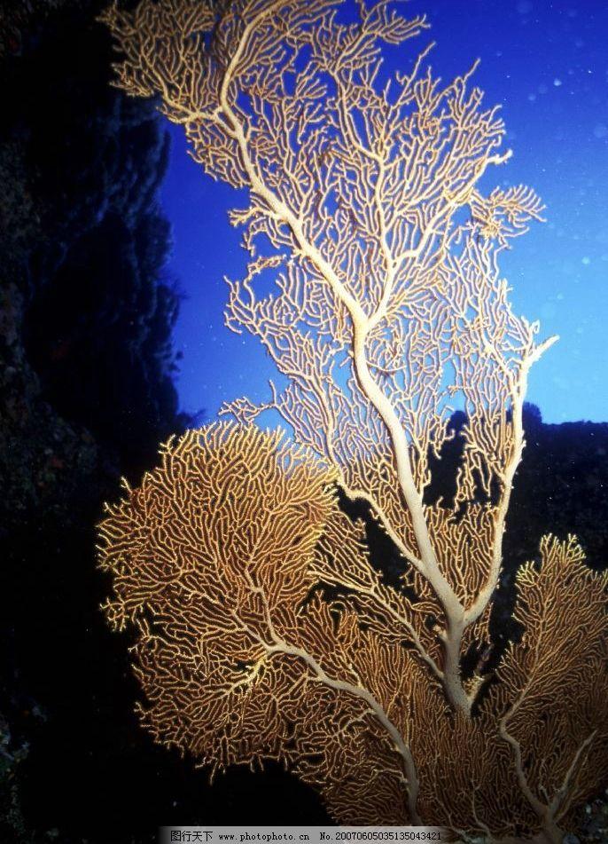 海底植物图片