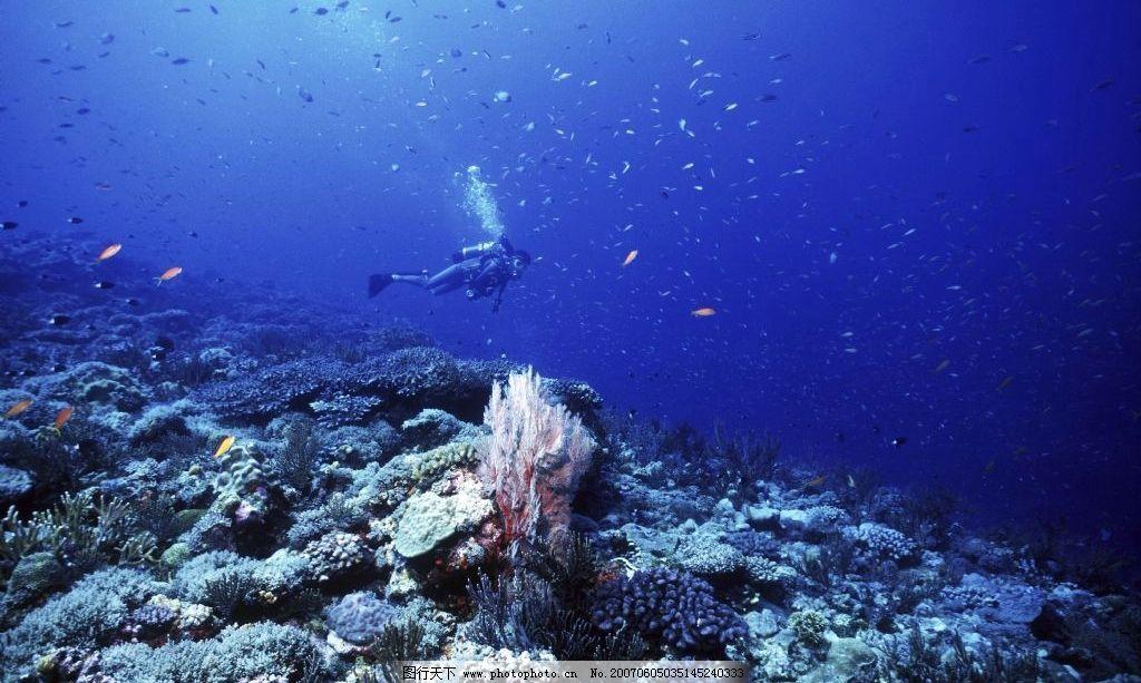 海洋生物 海底世界 水下摄影 海底美景 海底风景 深蓝色海水 生物世界