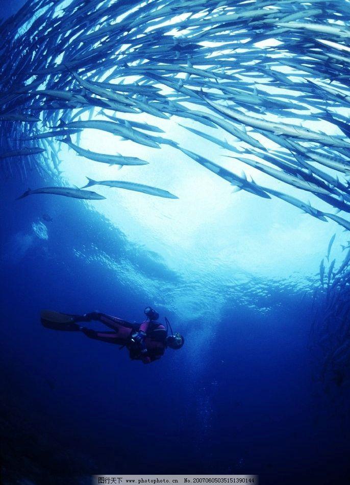 海洋鱼类 海底生物 海底植物 海底世界 大海 海洋动物 生物世界 海洋