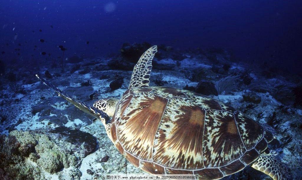 海龟 海洋生物 海底动物 海底世界 水下摄影 海底美景 海底风景