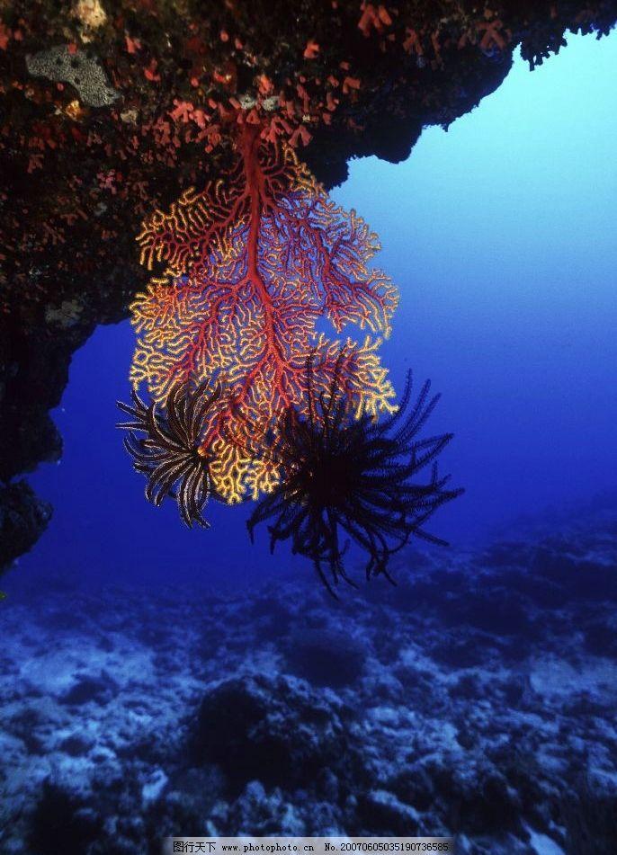 深海植物图片