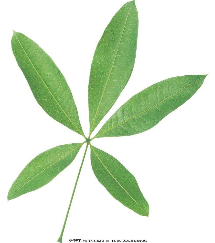植物绿叶图片