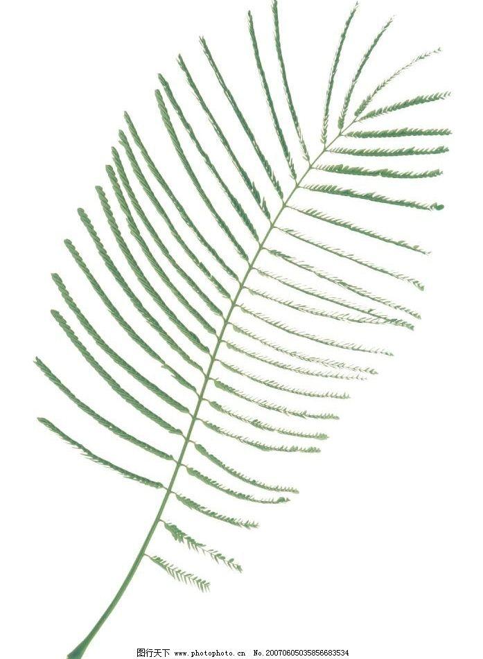 精致树叶标本 生物 植物