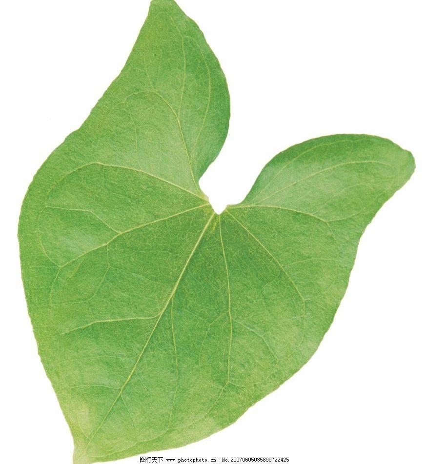 植物叶子图片 生物 植物 自然 树叶子 叶子 绿叶 生物世界 树木 植物