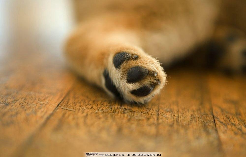 狗爪子狗腿 名贵犬类 动物 狗的图片 宠物狗 生物世界 家禽家畜 摄影