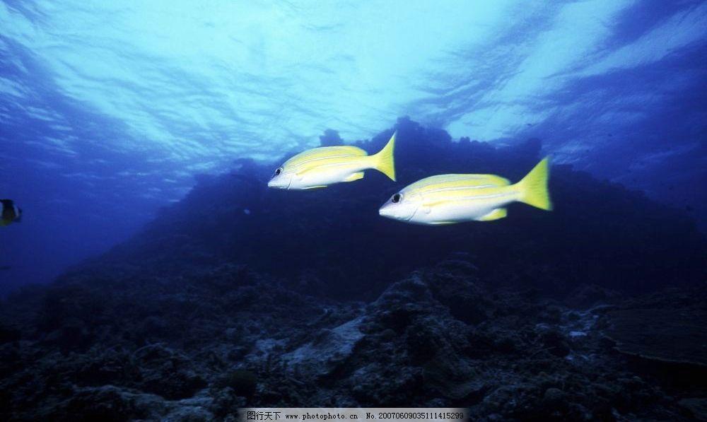 深海鱼类 海底 礁石 海鱼 动物 脊椎动物 大海 生物世界 海洋生物