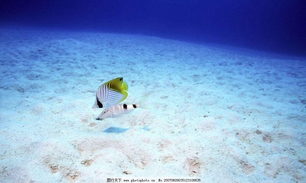 海底小鱼图片