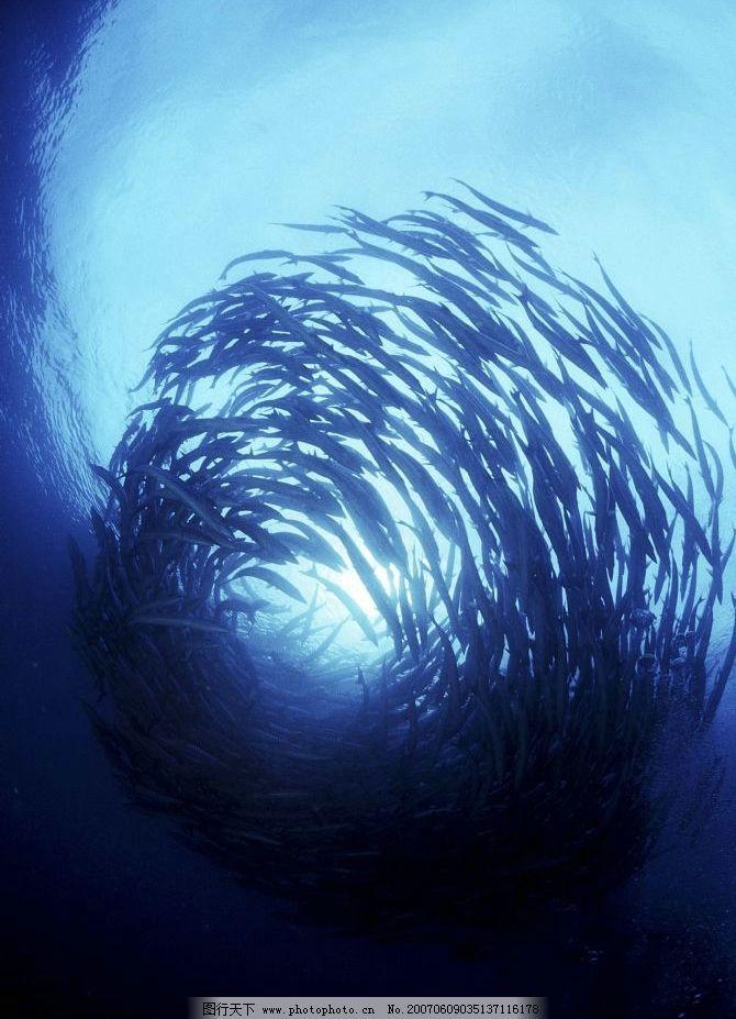 深海鱼群 鱼类 海鱼 动物 脊椎动物 大海 生物世界 海洋生物 海洋鱼类