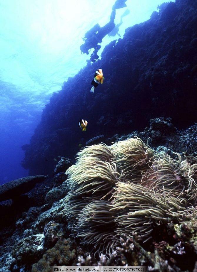 海底小鱼图片_自然风景_自然景观_图行天下图库
