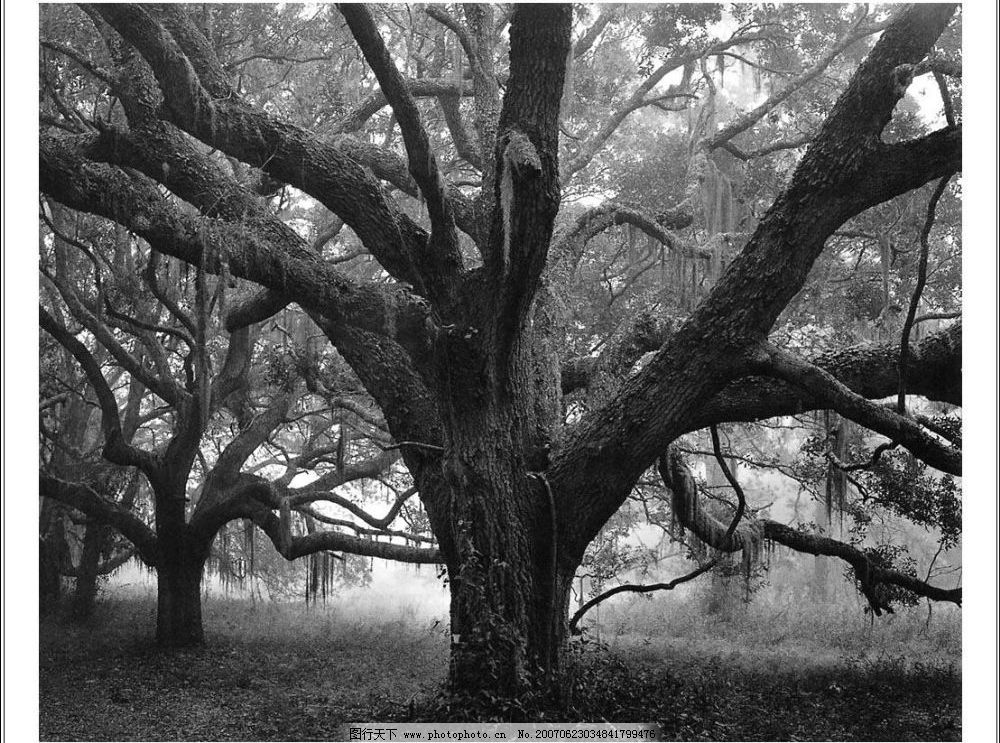 树 自然景观 自然风景 黑白世界 摄影图库 72dpi