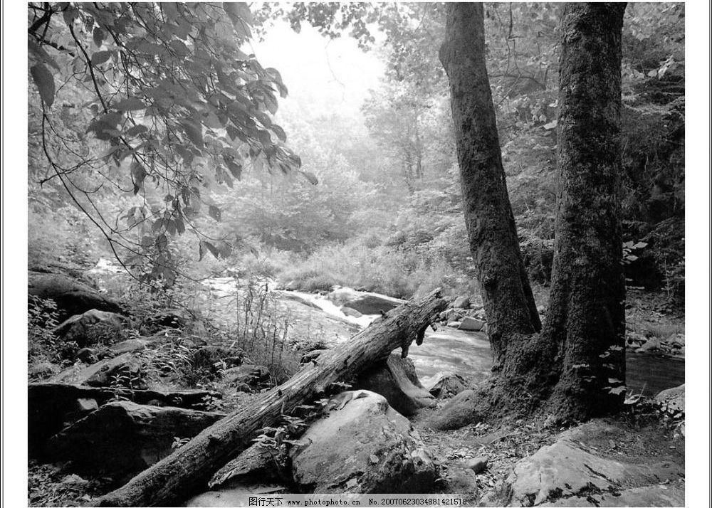 林间小路 自然景观 自然风景 黑白世界 摄影图库 72dpi