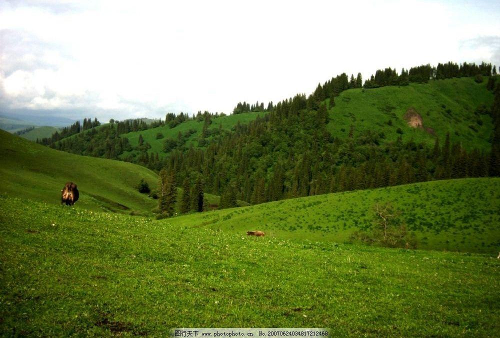 绿色山林牧牛 山坡 草地 绿草地 田园 自然景观 自然风景 绿意盎然