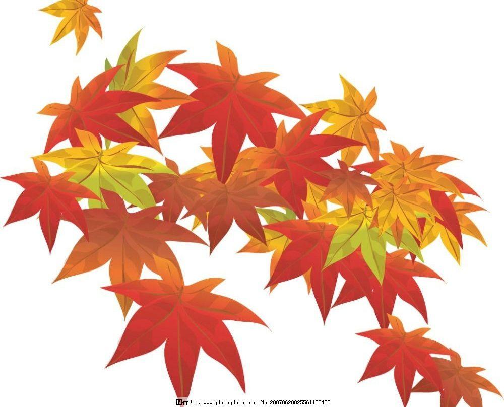 红枫叶子图片