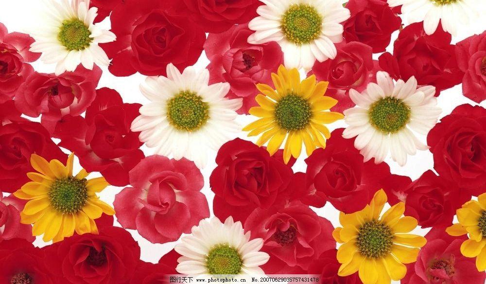 花朵 花卉 鲜花 植物 花草